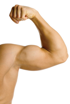 20080926-muscles1